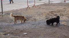 2016-01-08_13-46-42_ILCE-6000_DSC02482 (Miguel Discart (Photos Vrac)) Tags: 2016 75mm chien citytrip dog dogs epz1650mmf3556oss essaouira focallength75mm focallengthin35mmformat75mm holiday ilce6000 iso100 maroc morocco sony sonyilce6000 sonyilce6000epz1650mmf3556oss travel vacance vacances voyage