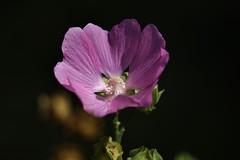 Flower (Hugo von Schreck) Tags: hugovonschreck flower blume blüte macro makro canoneos5dmarkiii tamronspaf180mmf35dildifmacro11