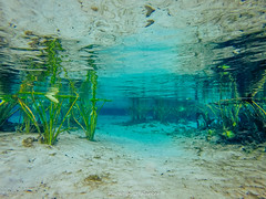 Alexander Springs (J. Parker Natural Florida Photographer) Tags: waterscape underwater gopro eelgrass color colorful vsco vscofilm alexandersprings spring water nature naturalbeauty wildflorida outdoor swimming swimminghole ocalanationalforest ocala florida centralflorida