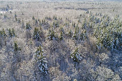 Snow Dance (Matt Champlin) Tags: winter cold winterwonderland christmas holiday break newyears 2019 life nature outdoors aerial snow trees forest drone drones dji woodland landscape peaceful