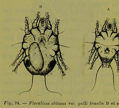 This image is taken from Page 116 of Les acariens parasites [electronic resource] (Medical Heritage Library, Inc.) Tags: acari arachnid vectors wellcomelibrary ukmhl medicalheritagelibrary europeanlibraries date1892 idb20406186