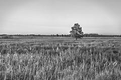 IMGL7431_2_3_Hiller Moor_bw (HDRforEver) Tags: hdr torfmoor hille karsten höltkemeier canon 5dmark3 5dmarkiii blackandwhite blackwhite new interesting landscape landschaft owl germany deutschland