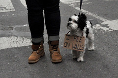 dog (greenelent) Tags: womensmarch streets protest women people newyork nyc notrump