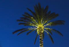 Electric Palm tree (radargeek) Tags: fortmyers florida fl 2018 october palmtree lights