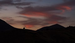 alone... with pink clouds dancing... (Alvin Harp) Tags: northerncalifornia i5 weed california pinkclouds sunset lonetree mountaintops silhouettes november 2018 cloudsstormssunsetssunrises sonyilce9 fe70200mmf28 naturesbeauty alvinharp