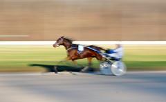 Wide Open Eyes (Penoly) Tags: trabrennen gelsentrab trotter race geläuf sulky olympus gelsenkirchen horse pferd cheval rennen auge eye mitzieher