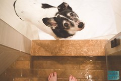 Week 4: Routine (bmurphy502) Tags: pet dog doggin dogs indoor inside bathroom shower wet home brown cute 35mm above fromabove white