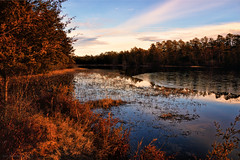 the water's edge (tom bourdot) Tags: approachingstorm bassriverstateforest bluesky contrast country forest gold lakeabsegami landscape light magichour mirror nature newjersey nikkor nikond3300 outdoor outside pinebarens reflection scenic shore sky slippingaway surface texture tombourdot trees vista walk water waterline weather weeds wild winter woods watersedge