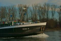 TMS RENE 19 (Lutz Blohm) Tags: tmsrene19 tankschiff rhein rheinschifffahrt speyer binnenschifffahrt binnenschiffe gütermotorschiff sonyfe24105mmf4goss sonyalpha7aiii rheinzuberg fluskilometer402