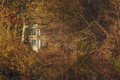 Country house (Jean-Luc Peluchon) Tags: fz1000 nature forest forêt arbre tree house maison maisonnette eau water ruisseau stream rivière river monochrome reflection reflexion reflet france aquitaine charente