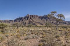 _RJS4722 (rjsnyc2) Tags: 2019 africa d850 desert dunes landscape namibia nikon outdoors photography remoteyear richardsilver richardsilverphoto safari sand sanddune travel travelphotographer animal camping nature tent trees wildlife
