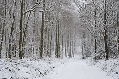 Un jour d'hiver, alors que la forêt était recouverte d'un manteau blanc_4 (Excalibur67) Tags: nikon d750 sigma globalvision art 24105f4dgoshsma forest foréts arbres trees nature neige snow vosgesdunord bois