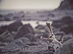 Beach Bokeh - Fehmarn - 5. Februar 2019 - Schleswig-Holstein - Germany (torstenbehrens) Tags: olympus penf 363mm f58 beach bokeh fehmarn 5 februar 2019 schleswigholstein germany