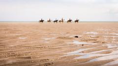 Mirage Équestre (Alain@BlueSunset) Tags: flou blurring chevaux horses plage beach sable sand eau water sea mer