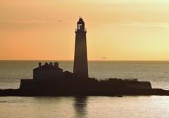 Dawn at St. Mary's Lighthouse - February Morning (Gilli8888) Tags: nikon coolpix p900 coast coastal eastcoast northeast northumberland northsea seatonsluice lighthouse stmaryslighthouse stmarysisland batesisland silhouette silhouettephotography seaside sea dawn morning light february sunrise
