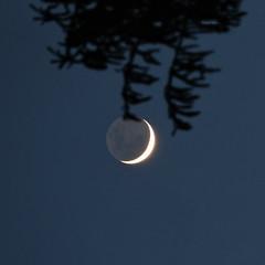 Opinions don't count (Robyn Hooz) Tags: galileo luna moon waxing falce cinerea rami branches cielo alba science padova