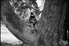 ** (Koprek) Tags: fujigw690ii fomapan 100 film analog 6x9 croatia opeka arboretum january 2019