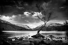 Y Goeden Unig, Llanberis (lowribearmanphotography) Tags: landscape llanberis monochrome lake mountains winter snowdonia cymru wales moody dramatic tree