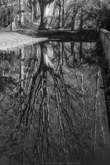 Reflection (James Etchells) Tags: barrington court national trust somerset monochrome black white portrait landscape reflection symmetry landscapes nikon lee filters south west england uk britain outdoor outdoors photography water tree nature natural world