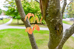 Leaves Growing on Tree (Jonatan Svensson Glad (Josve05a)) Tags: beauty natural summer day outdoors environment fall plant season green organic park outdoor tree leaf leaves grass growth autumn branch flora twig agriculture sweden august stockholmslän sverige se