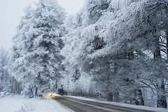 """White """"Tunnel"""" (Petri Karvonen) Tags: snow winter frost frosted frosty trees finland suonenjoki car lights road treetunnel suomi talvi luminen coated tie karttulantie suonenjoentie outdoor scenery leica summictonr 50mm 502 snowy branches nature leitz"""