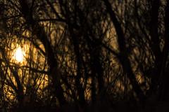 gold inside (*magma*) Tags: torreflavia palude riserva naturale ladispoli controluce backlight natura nature alberi trees