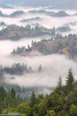 Winter Blanket (michael ryan photography) Tags: fog mist trees hills view california northerncalifornia sonoma sonomacounty michaelryanphotography