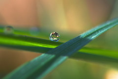 Délicatesse (Denis Vandewalle) Tags: waterdrop drop goutte herbe grass colors bokeh macro macrophoto