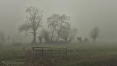 A foggy morning... (Ruud.) Tags: ruudschreuder nikon nikond850 d850 noordbrabant brabant roosendaal watermolen watermolenbeek watermolenbeekpad molenbeek brabantslandschap northbrabant netherlands nispen everlanden dutchlandscape landscape landschap paisajes paysage landschaft mist fog foggy misty