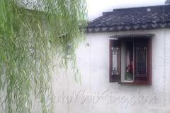 42989462392_e70a415712_b (Kingston4 Landscape) Tags: suzhou light rain fujifilm xt1 painterly feel m42 helios442 258 manual lens colors old bokeh bright watercolor painting