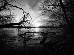 20190219-170648-00052A- (hugoholunder) Tags: sonne baum zweig wasser see ufer wolken olchingersee baumstamm steine sonnenuntergang bayern