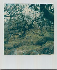 Scan 5 copy (Emily_sarahd) Tags: polaroids nature naturephotography landscapes flowers colour colourful pink woods forest trees sun
