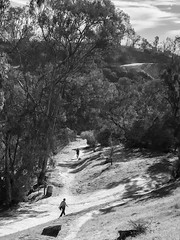 A fork in the road (ashokboghani) Tags: fork road blackandwhite monochrome losangeles california