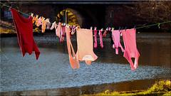 Washing day (Ostseetroll) Tags: deu deutschland geo:lat=5386143563 geo:lon=1068103842 geotagged lübeck sanktlorenzsüd schleswigholstein trave waschtag olympus em10markii
