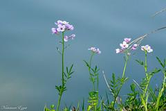 Un bouquet printanier (Ezzo33) Tags: france gironde nouvelleaquitaine bordeaux ezzo33 nammour ezzat sony rx10m3 parc jardin fleur fleurs flower flowers jaune yellow mauve rose pink rouge red bleu blue blanche white