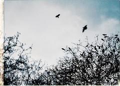 * (PattyK.) Tags: ioannina giannena giannina epirus ipiros balkans hellas ellada greece grecia griechenland birds winter january 2014 nikond3100 snapseed ιωάννινα γιάννενα πουλιά ήπειροσ ελλάδα βαλκάνια