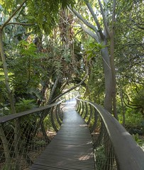 Kirstenbosch (Peter Nichol) Tags: kirstenbosch boomslang tree canopy walkway capetown south africa floral botanical panorama westerncape