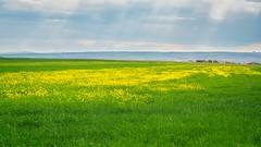 Zen series. (RKAMARI) Tags: 2016 ankara gölbaşı spring artistic artphotography clouds field fineart flowers green landscape outdoor yellow flickrsbest greenscene zen