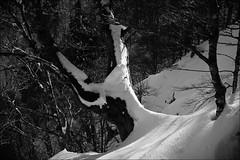 arbre dans la neige - Vosges (JJ_REY) Tags: arbre neige tree snow montagnes mountains nikon d700 28mmf28aiscrc vosges alsace france