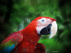 Scarlet Macaw (maom_1 (Off, most of the time)) Tags: birds scarletmacaw landscape rainforest nature wildlife animal trees grass bird collage digital texture
