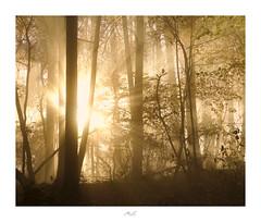 Temple of Light (Max Angelsburger) Tags: dark wood light beams tyndall rays fog mist tree stellar sun bright branches glow moody badenwürttemberg herbst autumn 2018 photoruptstellarshotspocketworldiglandscapedreamspotsvisualheavenlandscapephotolandscapelovernatgeoadventureearthexperiencemthrworldmajesticearth