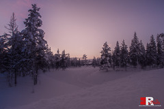 purple sky (Michele Rallo - MR PhotoArt) Tags: michelerallomichelerallomrphotoartemmerrephotoartphotopho lapland lapponia finlandia finland polo north northern world mondo viaggio viaggi travel adventure avventura snow neve nordico paese paesi regione region arctic landscape skyline natura nature trees purple viola colore colori colours colors