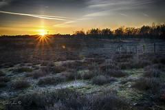 Zilvermeer 2 (Geert E) Tags: landscape landschap mol sunset dawn zilvermeer heide heather moor heathland fence