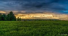 Sunset Clouds (Stathis Iordanidis) Tags: amazinglandscape nature countryside field farm grassland grass dramaticclouds dramaticsky sky clouds sundown sunset