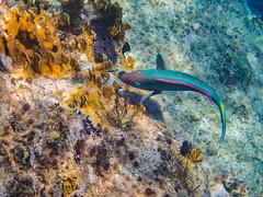 DCL March 2019 Tortola Underwater-93.jpg (Rhinodad) Tags: disneycruise disneyfantasy tuesday underwater 2019 dcl tortola britishvirginislands vg