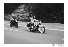 Bikers (Aljaž Anžič Tuna) Tags: fdy7 bikers panning female women harley davidson hcarleydavidson ride street road photo365 project365 people onephotoaday onceaday slovenia streetphotography 365 35mm 365challenge 365project nikkor nice naturallight nikon nikond700 nikkor50mm 50mm 50mmf18 f18 dailyphoto day d700 bw blackandwhite black white blackwhite motorbikes motor bikerchick