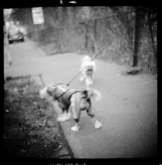 Stadt (tiltdesign2016) Tags: ilfordfp4plus canoncanoscan9000f mittelformat 6x6 ilfordilfosol3114 ilford wuppertal elberfeld stadt street strase hund