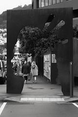 IMG_3716 (Arapaoa Moffat Photography) Tags: zenit zenitxp zenit12xp slr russiantank vintagelens canon1100d helios helios442 wellington market dog waterfront water architecture arapaoamoffat