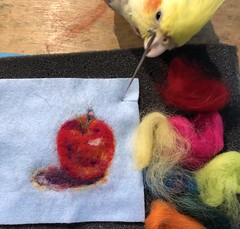 Needle felting of an Apple. #paintingwithwool #needlefelting #apple #process #cockatiel #bird #parrot #art #craft #feltingakolamble (akolamble) Tags: paintingwithwool needlefelting apple process cockatiel bird parrot art craft feltingakolamble