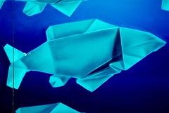 Origami Graffiti (nothinginside) Tags: paper fish origami graffiti murales murale mural wall panel pescara italy 2019 abruzzo stazione station art urban pop street blue azzurro water acqua